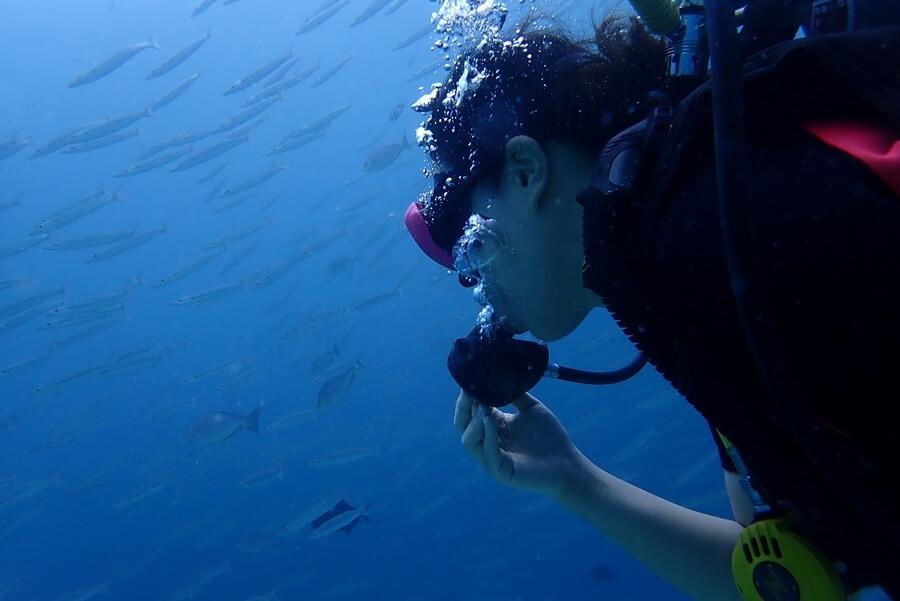 ピピ島 体験 ダイビング