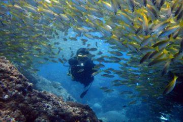ピピ島 ダイビングツアー