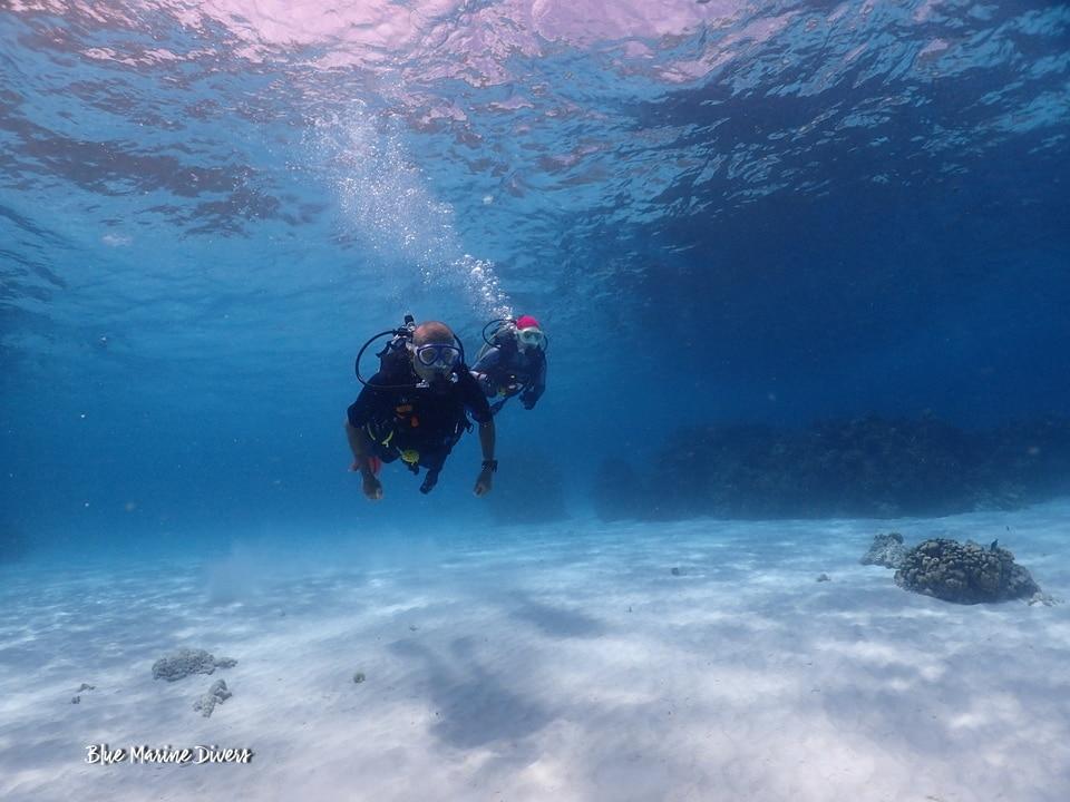 ピピ島ダイビング 禁止