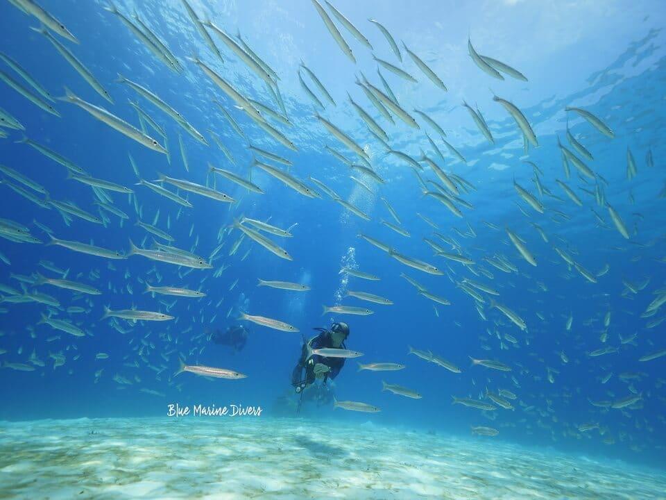 ピピ島 ダイビング