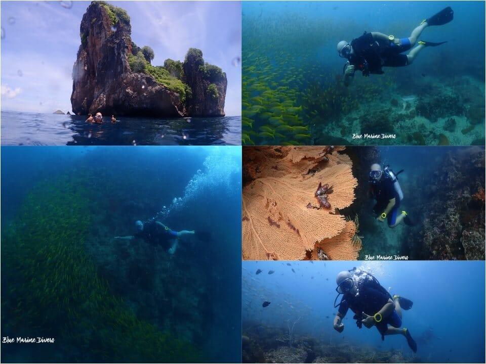 ピピ島ダイビング